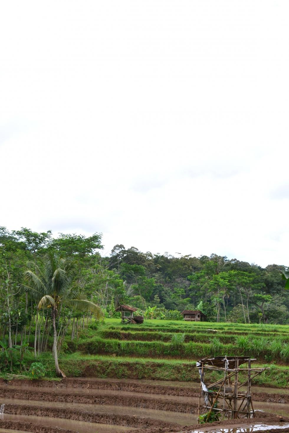 Sejarah Kampung Nongkosawit